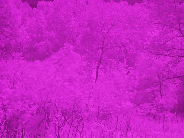 2789422097_5bdc2f0d88_z